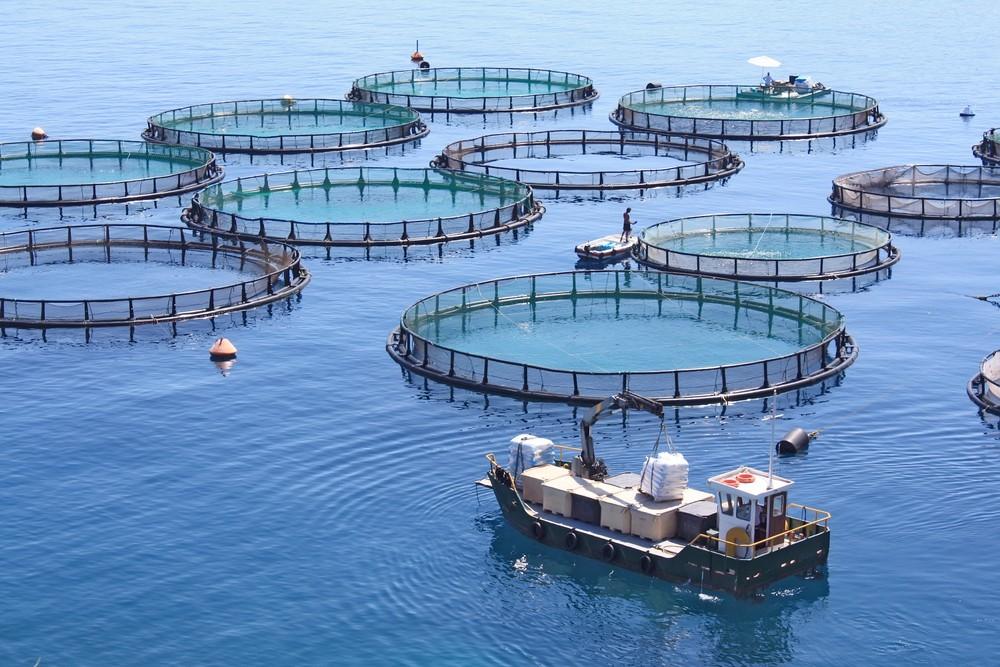 l 39 allevamento ittico diventa sostenibile migliora la